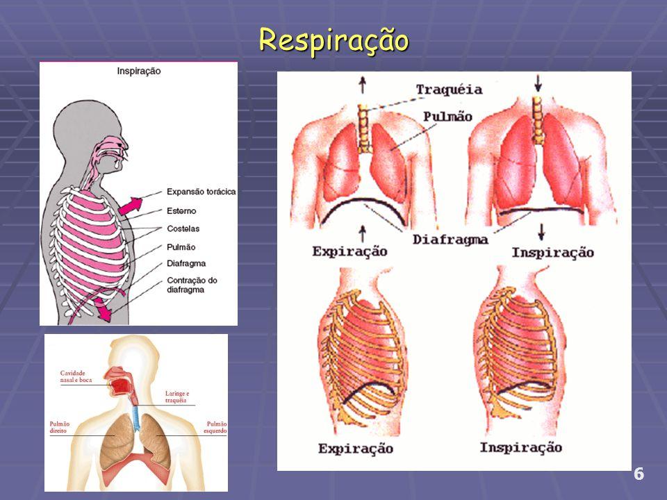 Contagem de tempo 7 Exercício para respiração Inspire o ar e solta em S Inspire o ar e solta em Ch Inspire o ar e solta em F Inspire o ar e solta em Z Lentamente