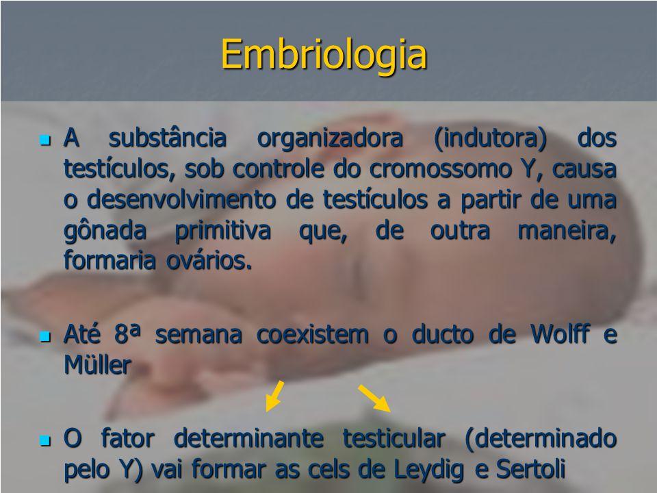 Embriologia  A substância organizadora (indutora) dos testículos, sob controle do cromossomo Y, causa o desenvolvimento de testículos a partir de uma