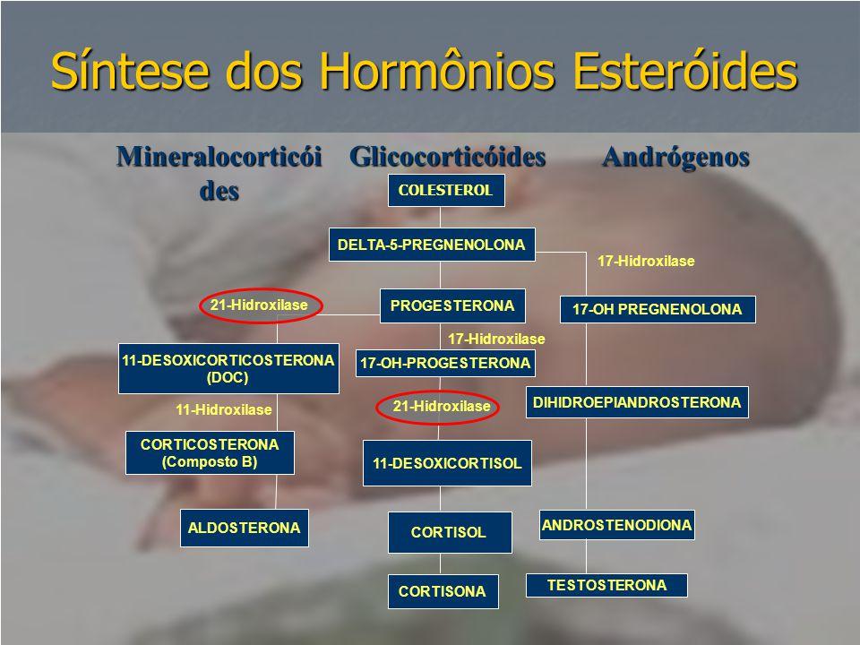 Síntese dos Hormônios Esteróides COLESTEROL 17-Hidroxilase PROGESTERONA 17-Hidroxilase 17-OH PREGNENOLONA 11-Hidroxilase CORTISONA ANDROSTENODIONA TES