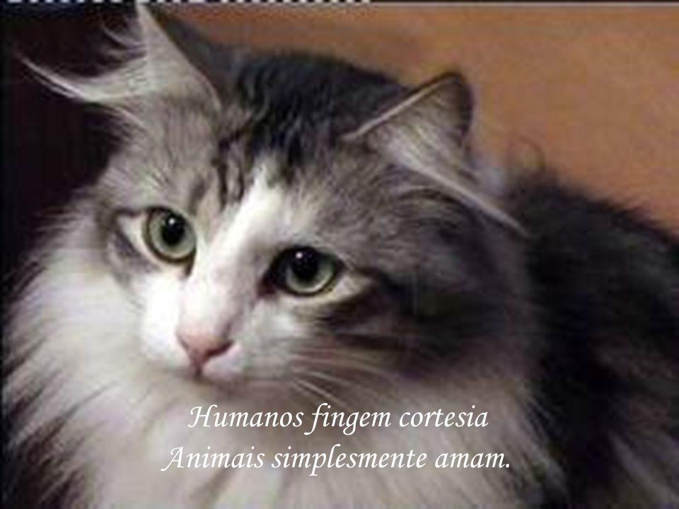 Humanos são como desconhecidos Animais são como irmãos