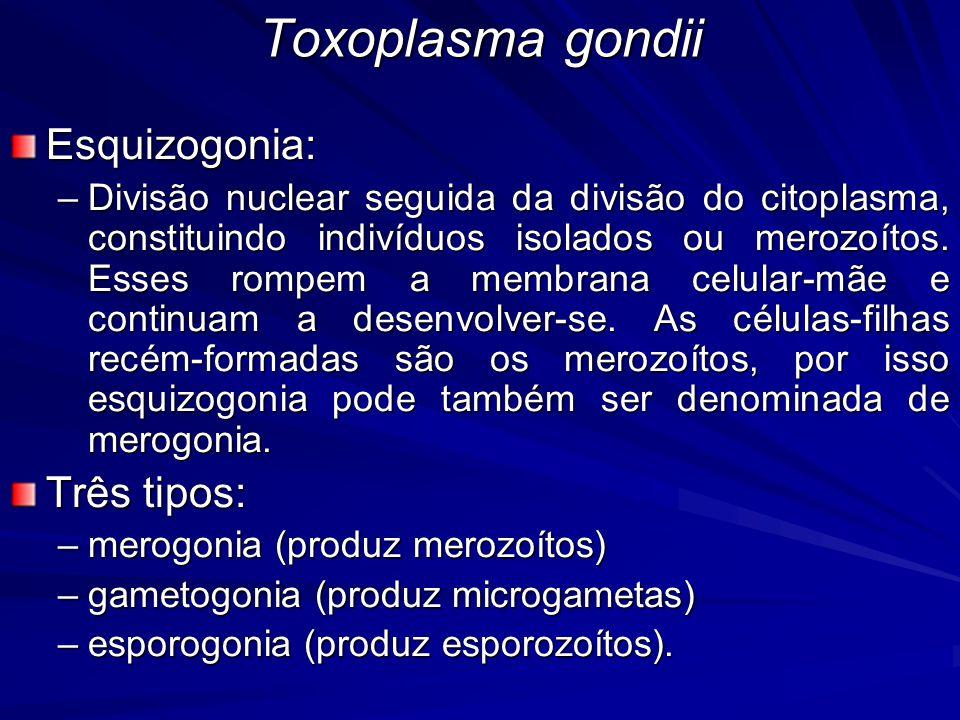 Toxoplasma gondii Sintomatologia - Fase aguda –Febre –Amigdalite –Infartamento ganglionar –Depende Quantidade de formas infectantes adquiridas Cepa do parasito (virulenta ou avirulenta) Susceptibilidade do hospedeiro –Pode matar o hospedeiro FetosImunodeprimidos –Pode diminuir ou cessar Resposta imune específica