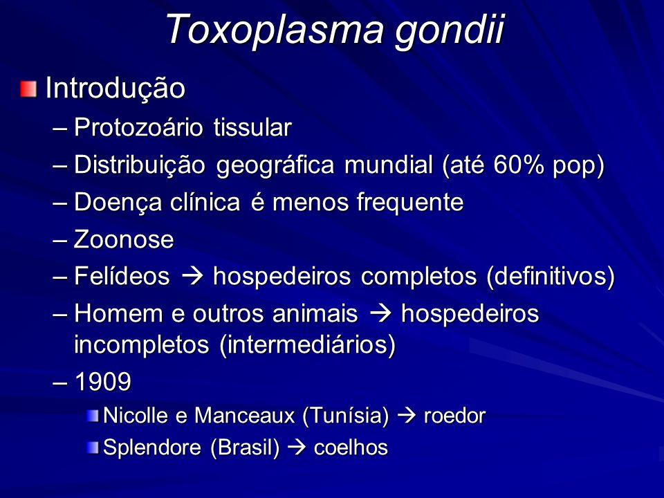 Toxoplasma gondii Patogenia: –Toxoplasmose congênita ou pré-natal Mãe em fase aguda ou reagudização Depende –Do tempo de acometimento fetal –Virulência da cepa –Da resposta imunológica da mãe –Do período de gestação 10 %  aborto ou morte 10 a 23%  sinais clínicos ao nascimento