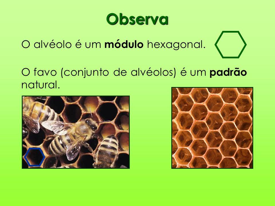 Observa O alvéolo é um módulo hexagonal. O favo (conjunto de alvéolos) é um padrão natural.