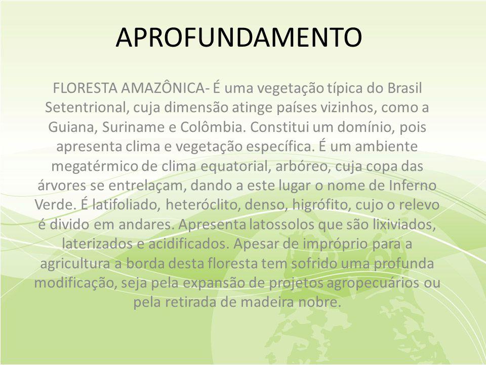 APROFUNDAMENTO FLORESTA AMAZÔNICA- É uma vegetação típica do Brasil Setentrional, cuja dimensão atinge países vizinhos, como a Guiana, Suriname e Colômbia.