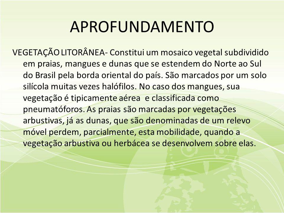 APROFUNDAMENTO VEGETAÇÃO LITORÂNEA- Constitui um mosaico vegetal subdividido em praias, mangues e dunas que se estendem do Norte ao Sul do Brasil pela borda oriental do país.