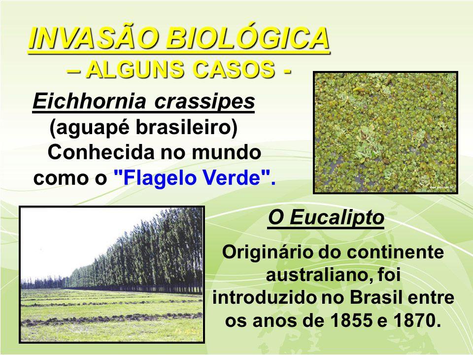 Eichhornia crassipes (aguapé brasileiro) O Eucalipto Originário do continente australiano, foi introduzido no Brasil entre os anos de 1855 e 1870.