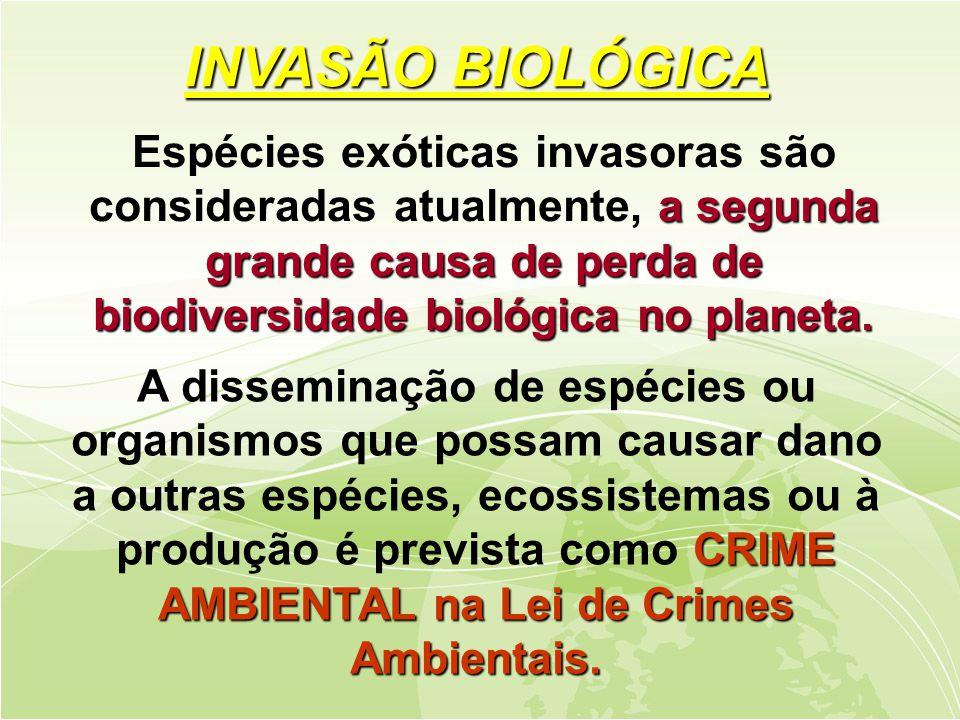 CRIME AMBIENTAL na Lei de Crimes Ambientais.