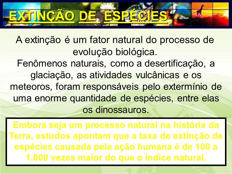 EXTINÇÃO DE ESPÉCIES A extinção é um fator natural do processo de evolução biológica.