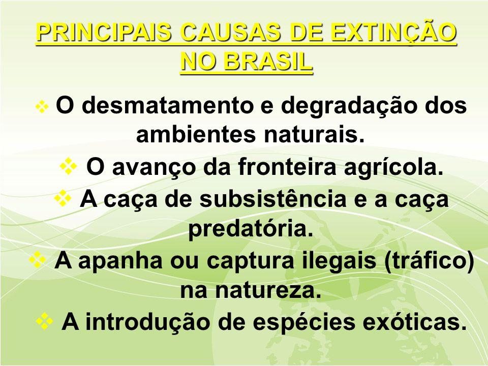  O desmatamento e degradação dos ambientes naturais.