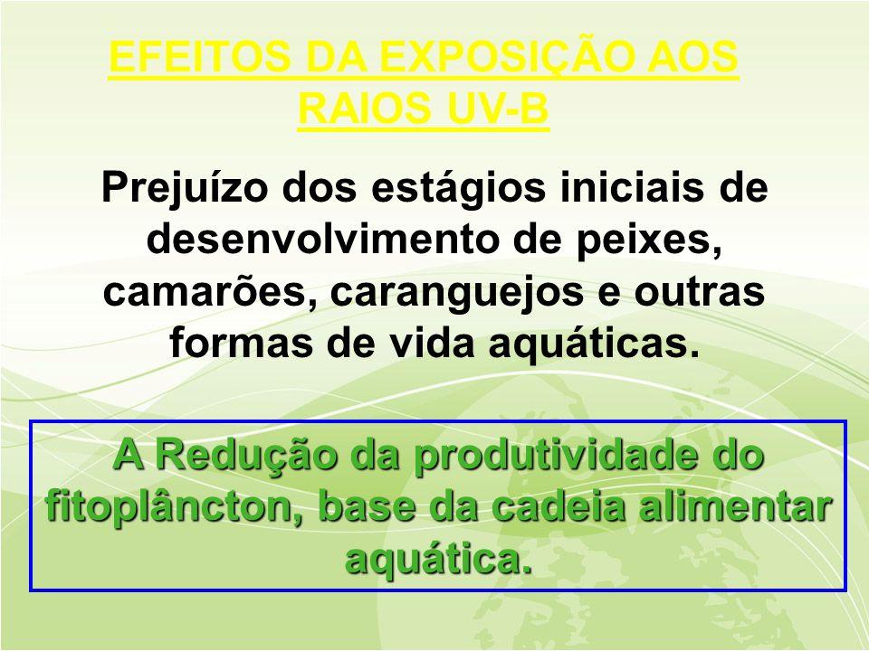 Prejuízo dos estágios iniciais de desenvolvimento de peixes, camarões, caranguejos e outras formas de vida aquáticas.