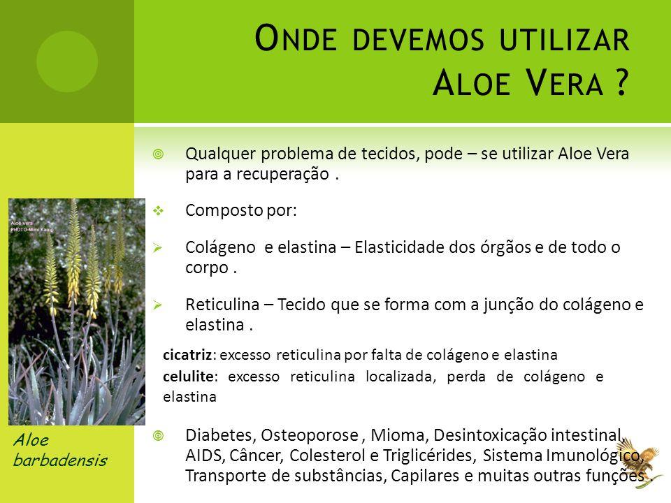 Aloe barbadensis O NDE DEVEMOS UTILIZAR A LOE V ERA ?  Qualquer problema de tecidos, pode – se utilizar Aloe Vera para a recuperação.  Composto por: