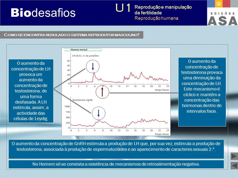 Biodesafios 12 Como se encontra regulado o sistema reprodutor masculino? O aumento da concentração de LH provoca um aumento da concentração de testost