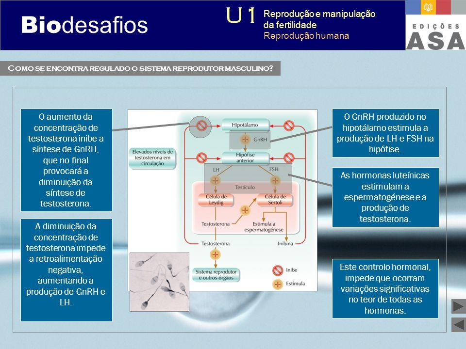 Biodesafios 12 O GnRH produzido no hipotálamo estimula a produção de LH e FSH na hipófise. As hormonas luteínicas estimulam a espermatogénese e a prod