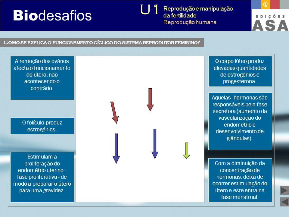 Biodesafios 12 Como se explica o funcionamento cíclico do sistema reprodutor feminino? A remoção dos ovários afecta o funcionamento do útero, não acon
