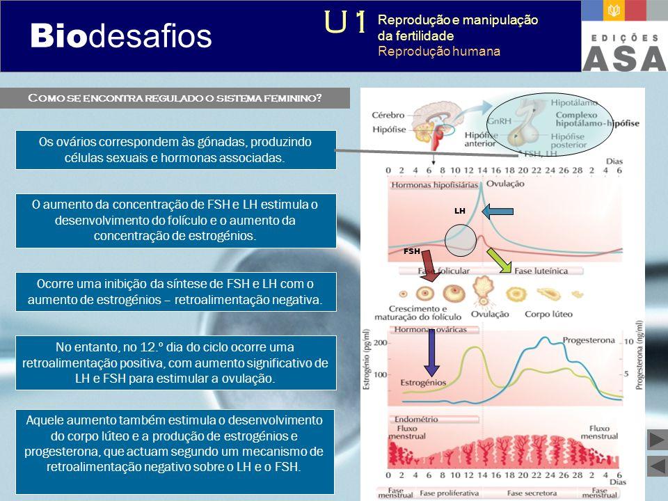 Biodesafios 12 Como se encontra regulado o sistema feminino? Os ovários correspondem às gónadas, produzindo células sexuais e hormonas associadas. O a