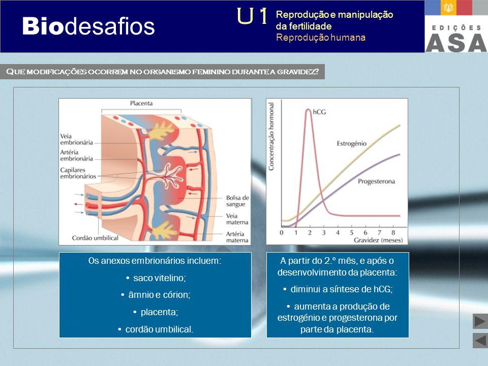 Biodesafios 12 Os anexos embrionários incluem: • saco vitelino; • âmnio e córion; • placenta; • cordão umbilical. A partir do 2.º mês, e após o desenv