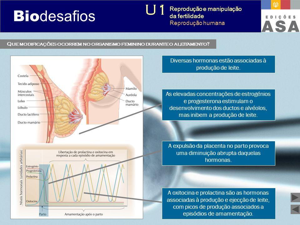 Biodesafios 12 Que modificações ocorrem no organismo feminino durante o aleitamento? As elevadas concentrações de estrogénios e progesterona estimulam