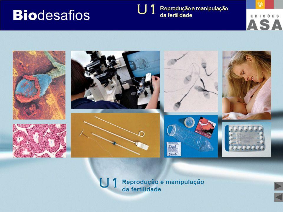 Biodesafios 12 Como se processa a produção dos gâmetas femininos.