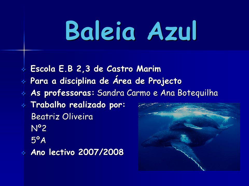 Baleia Azul  Escola E.B 2,3 de Castro Marim  Para a disciplina de Área de Projecto  As professoras: Sandra Carmo e Ana Botequilha  Trabalho realiz