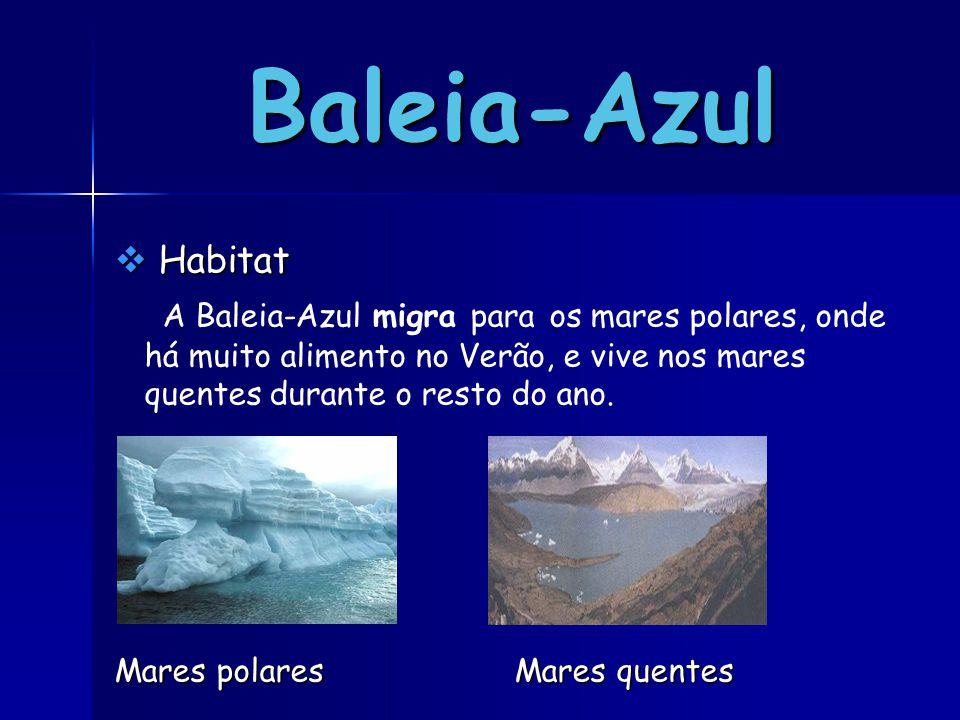 Baleia-Azul  H H H Habitat A Baleia-Azul migra para os mares polares, onde há muito alimento no Verão, e vive nos mares quentes durante o resto do ano.