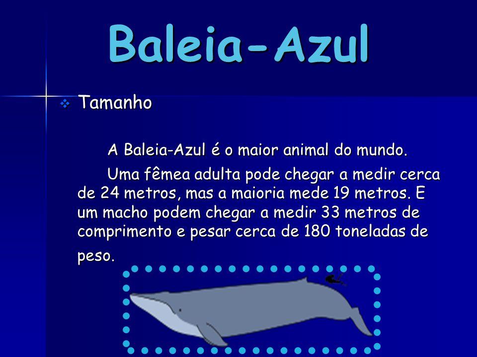 Baleia-Azul TTTTamanho A Baleia-Azul é o maior animal do mundo. Uma fêmea adulta pode chegar a medir cerca de 24 metros, mas a maioria mede 19 met