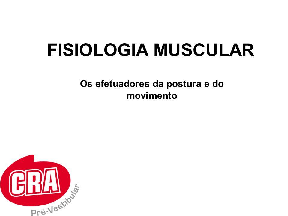 Músculo esquelético Músculo cardíaco Músculo Liso Músculo Estriado Músculo Liso TIPOS DE MÚSCULOS