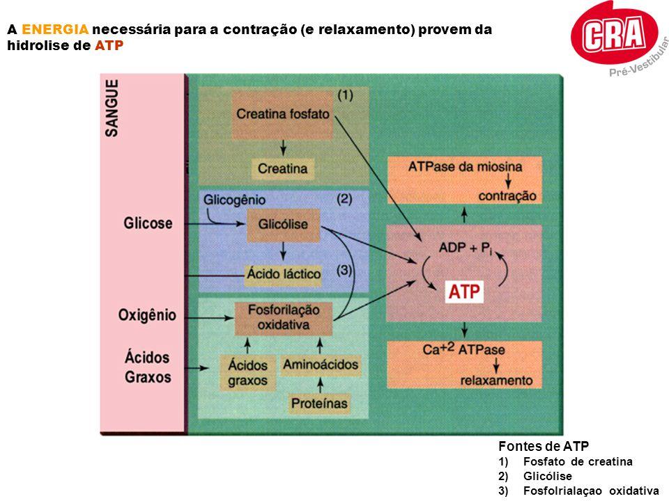 A ENERGIA necessária para a contração (e relaxamento) provem da hidrolise de ATP Fontes de ATP 1)Fosfato de creatina 2)Glicólise 3)Fosfolrialaçao oxid