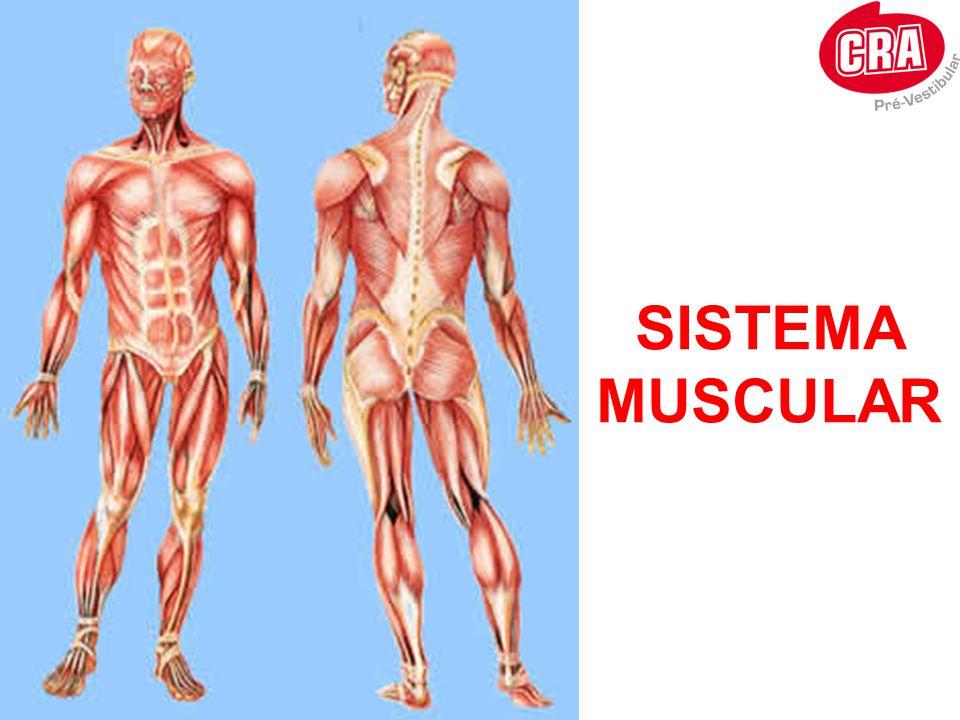 DEFINIÇÃO •Os anabolizantes, ou esteróides androgênicos anabólicos, são hormônios sintéticos que estimulam o desenvolvimento de vários tecidos do corpo a partir do crescimento da célula (hipertrofia) e sua posterior divisão (hiperplasia).