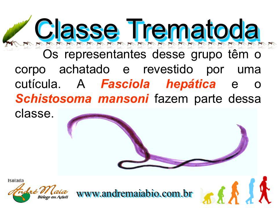 www.andremaiabio.com.brwww.andremaiabio.com.br Classe Trematoda Os representantes desse grupo têm o corpo achatado e revestido por uma cutícula.