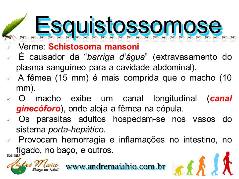www.andremaiabio.com.brwww.andremaiabio.com.br EsquistossomoseEsquistossomose  Verme: Schistosoma mansoni  É causador da barriga d'água (extravasamento do plasma sanguíneo para a cavidade abdominal).