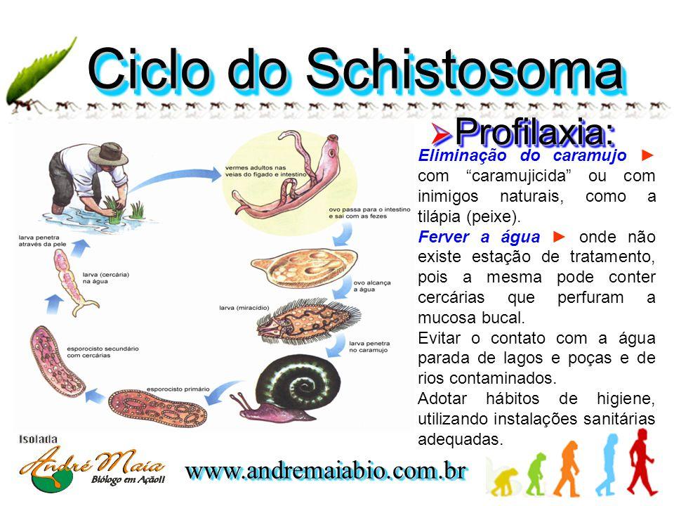 www.andremaiabio.com.brwww.andremaiabio.com.br Ciclo do Schistosoma Eliminação do caramujo ► com caramujicida ou com inimigos naturais, como a tilápia (peixe).
