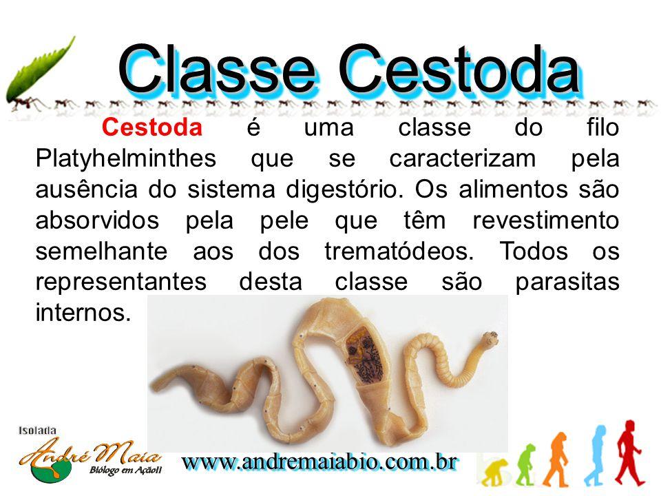 www.andremaiabio.com.brwww.andremaiabio.com.br Classe Cestoda Cestoda é uma classe do filo Platyhelminthes que se caracterizam pela ausência do sistema digestório.