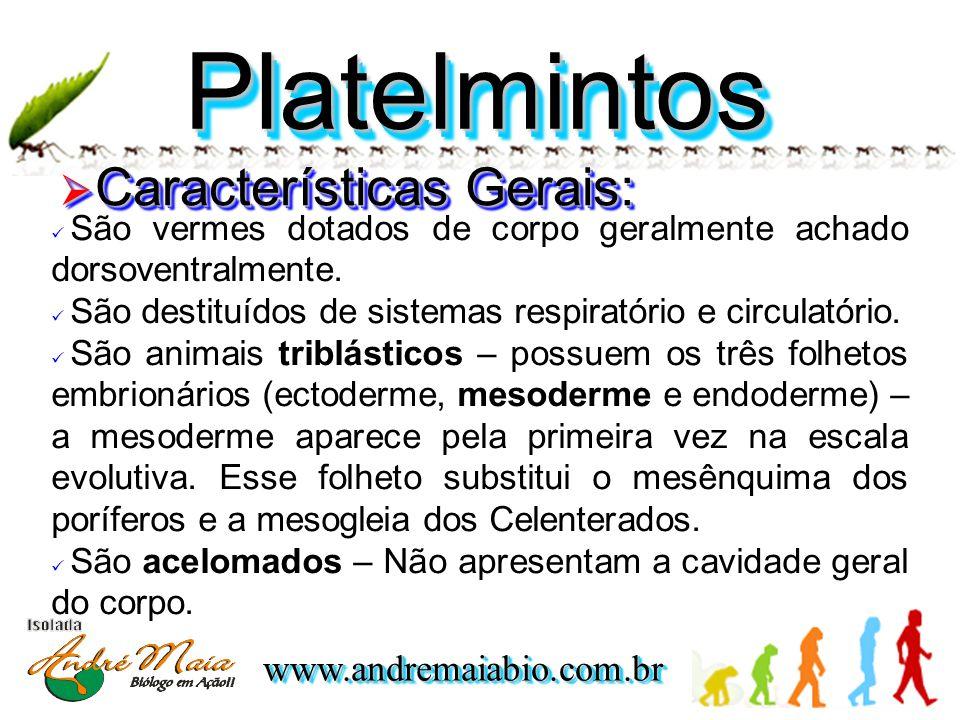 www.andremaiabio.com.brwww.andremaiabio.com.br PlatelmintosPlatelmintos  Características Gerais:  São vermes dotados de corpo geralmente achado dorsoventralmente.