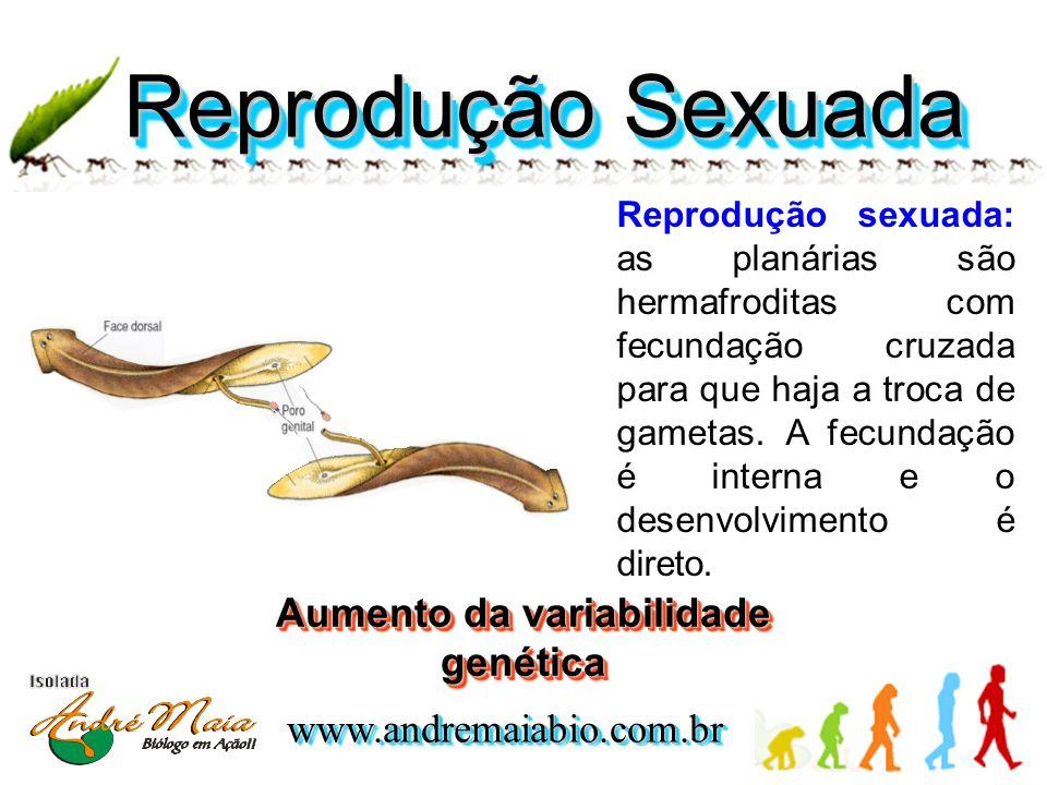 www.andremaiabio.com.brwww.andremaiabio.com.br Reprodução Sexuada Reprodução sexuada: as planárias são hermafroditas com fecundação cruzada para que haja a troca de gametas.