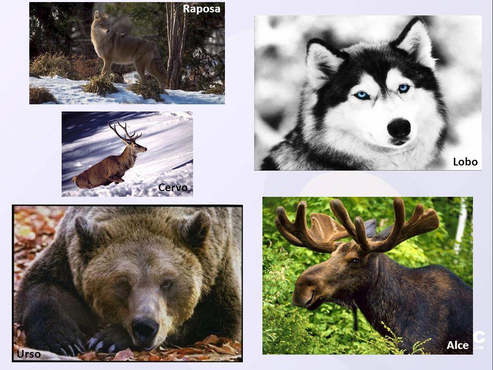 Urso Alce Lobo Cervo Raposa
