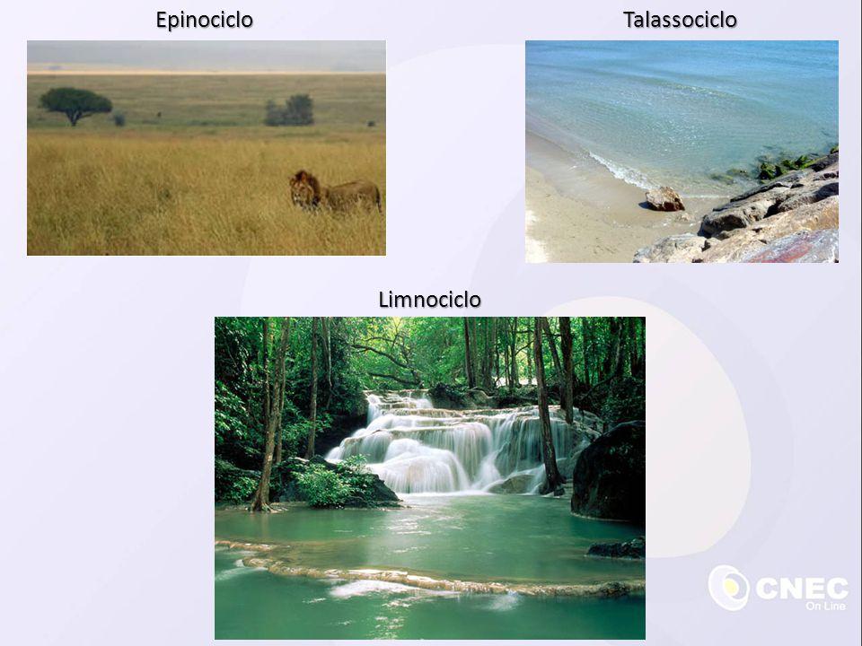  Seis grandes tipos de biomas: • Tundra • Taiga • Florestas temperadas • Florestas tropicais • Campos: estepes e savanas • Desertos