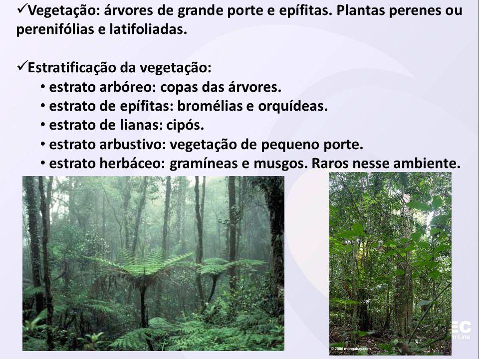  Vegetação: árvores de grande porte e epífitas. Plantas perenes ou perenifólias e latifoliadas.  Estratificação da vegetação: • estrato arbóreo: cop
