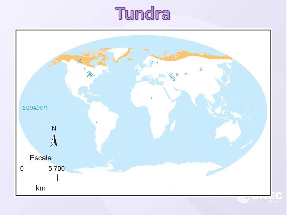  Ocorre durante o período de degelo no Polo Norte.