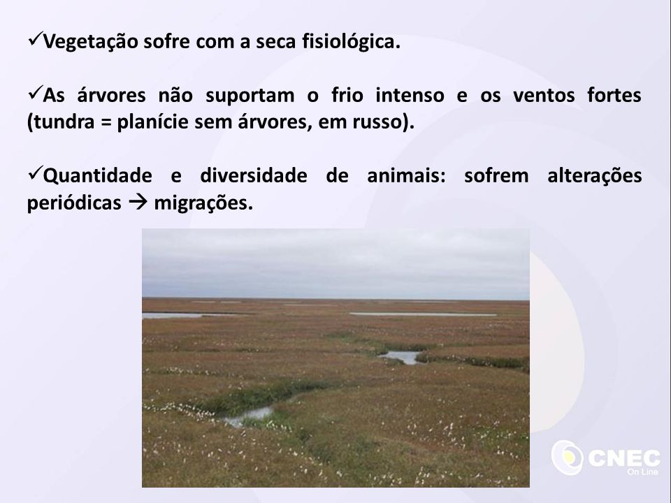  Espécies residentes: alguns mamíferos e insetos • adaptações para o frio. Renas Raposas Caribus