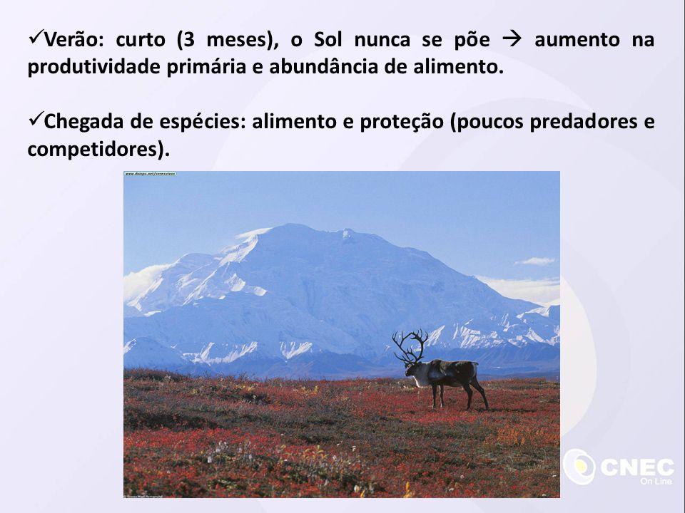  Elevada temperatura média e elevado índice pluviométrico  clima ameno: grande biodiversidade.