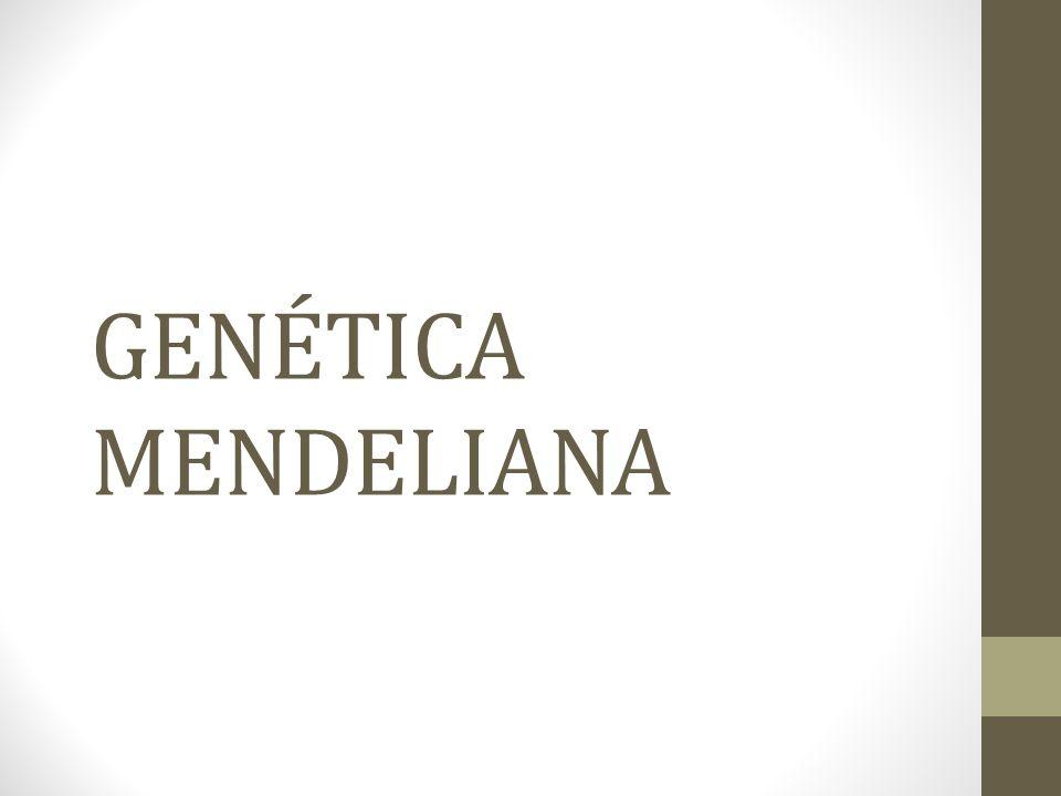 Primeira lei de Mendel • Os dois membros de um par de genes se separam durante a formação dos gametas.