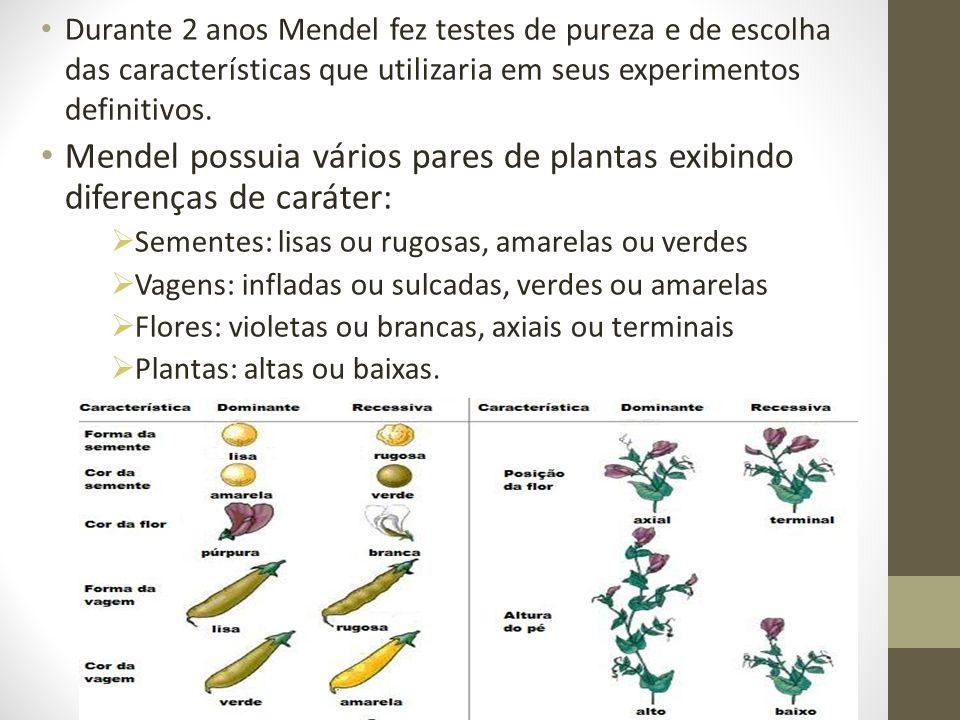 • Durante 2 anos Mendel fez testes de pureza e de escolha das características que utilizaria em seus experimentos definitivos. • Mendel possuia vários