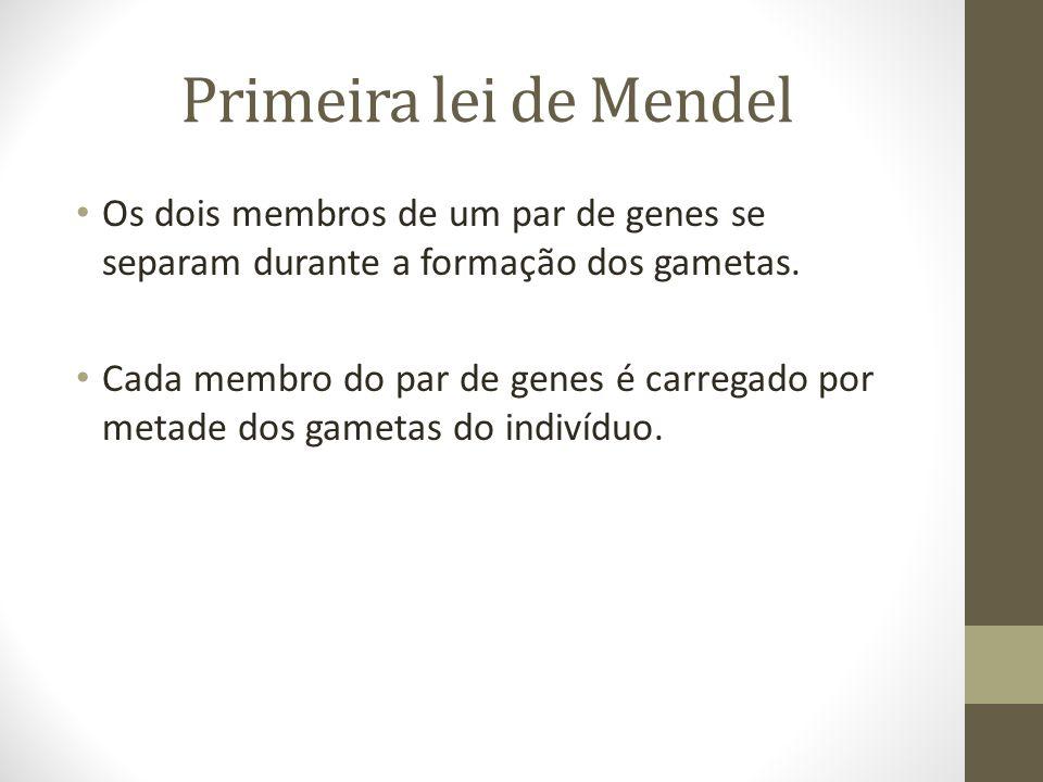 Primeira lei de Mendel • Os dois membros de um par de genes se separam durante a formação dos gametas. • Cada membro do par de genes é carregado por m
