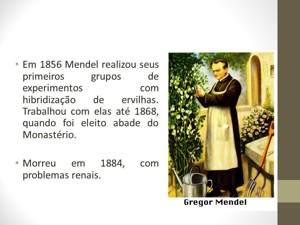 • Em 1856 Mendel realizou seus primeiros grupos de experimentos com hibridização de ervilhas. Trabalhou com elas até 1868, quando foi eleito abade do