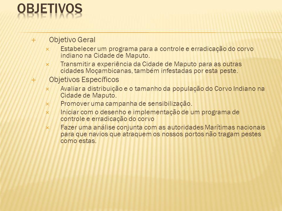  Objetivo Geral  Estabelecer um programa para a controle e erradicação do corvo indiano na Cidade de Maputo.  Transmitir a experiência da Cidade de