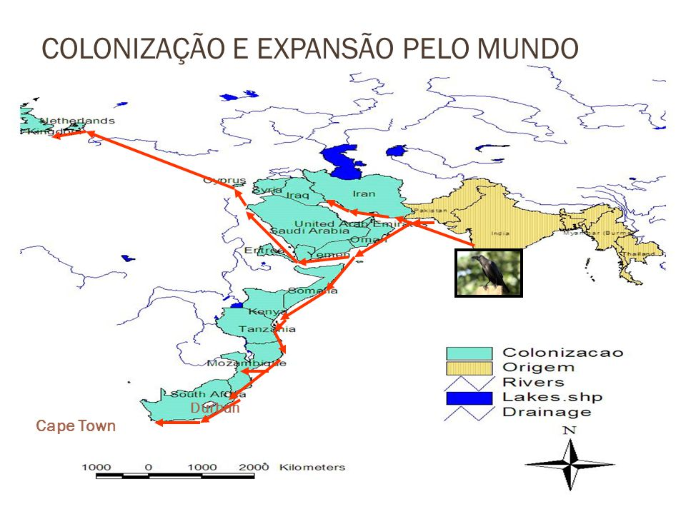 Nacala Maputo Beira Casos Confirmados Província de (nos últimos 15 anos): 1.Nampula Nacala Porto 2.Sofala (nos últimos 15 anos): Cidade da Beira De Ponta Gea á Macuti (ao longo da mariginal) 3.