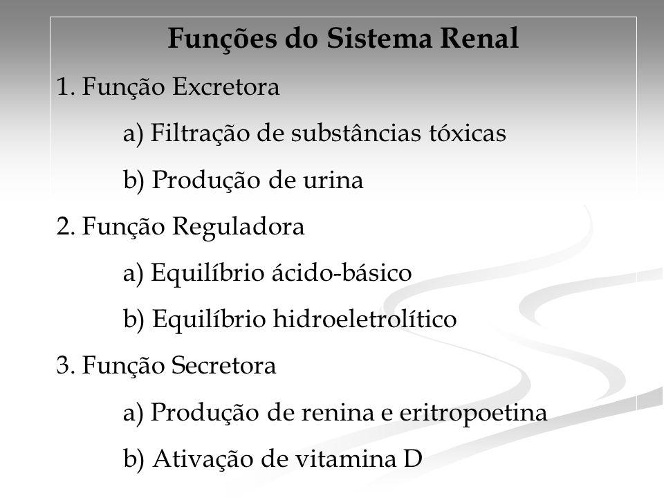 Funções do Sistema Renal 1. Função Excretora a) Filtração de substâncias tóxicas b) Produção de urina 2. Função Reguladora a) Equilíbrio ácido-básico