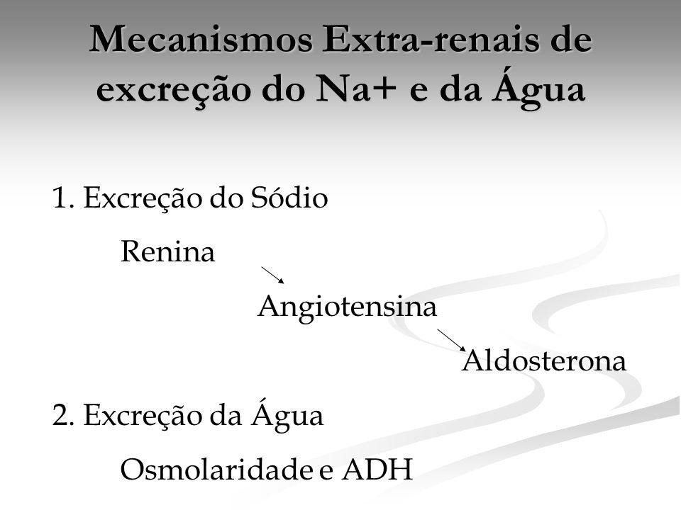 Mecanismos Extra-renais de excreção do Na+ e da Água 1. Excreção do Sódio Renina Angiotensina Aldosterona 2. Excreção da Água Osmolaridade e ADH