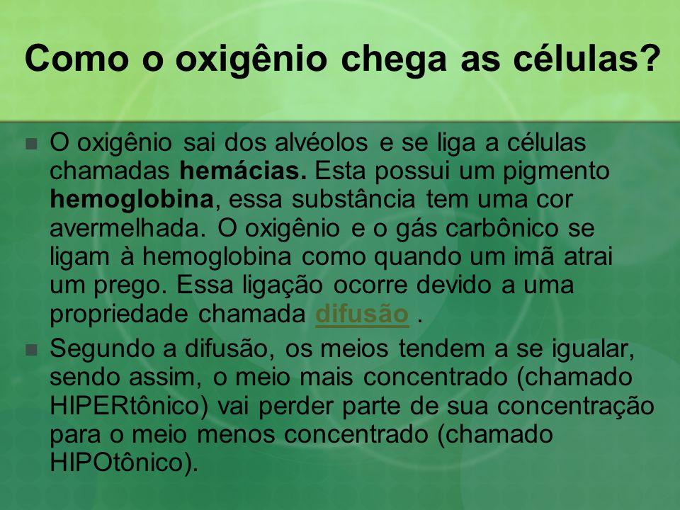 Como o oxigênio chega as células?  O oxigênio sai dos alvéolos e se liga a células chamadas hemácias. Esta possui um pigmento hemoglobina, essa subst
