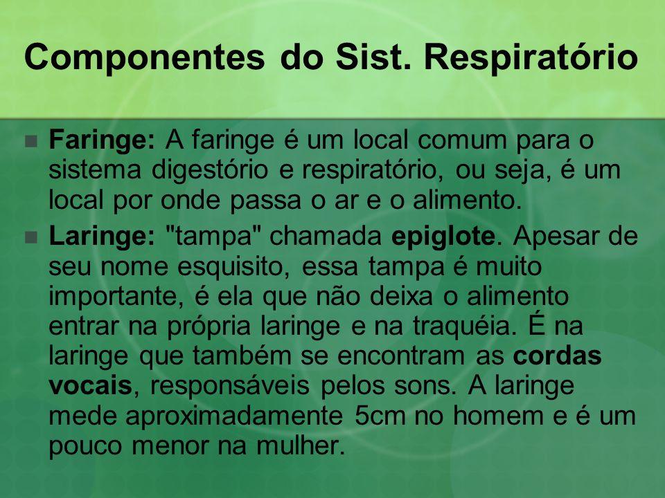 Componentes do Sist. Respiratório  Faringe: A faringe é um local comum para o sistema digestório e respiratório, ou seja, é um local por onde passa o